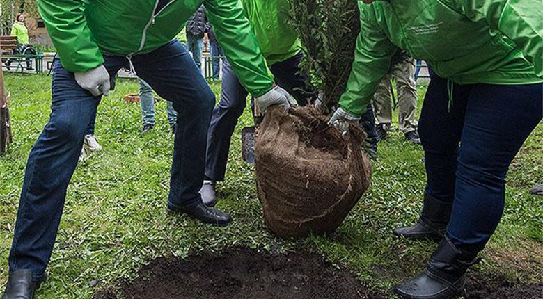 Посадка деревьев цена