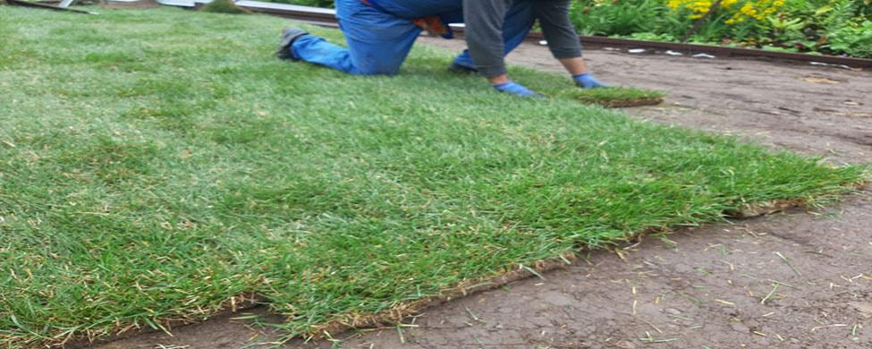 Рулонный газон в Санкт-Петербурге