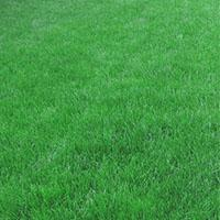 Рулонный газон Класика
