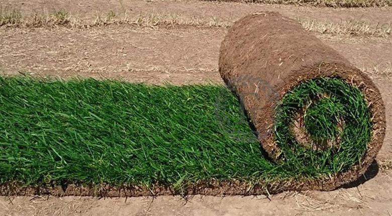 Купить рулонный газон