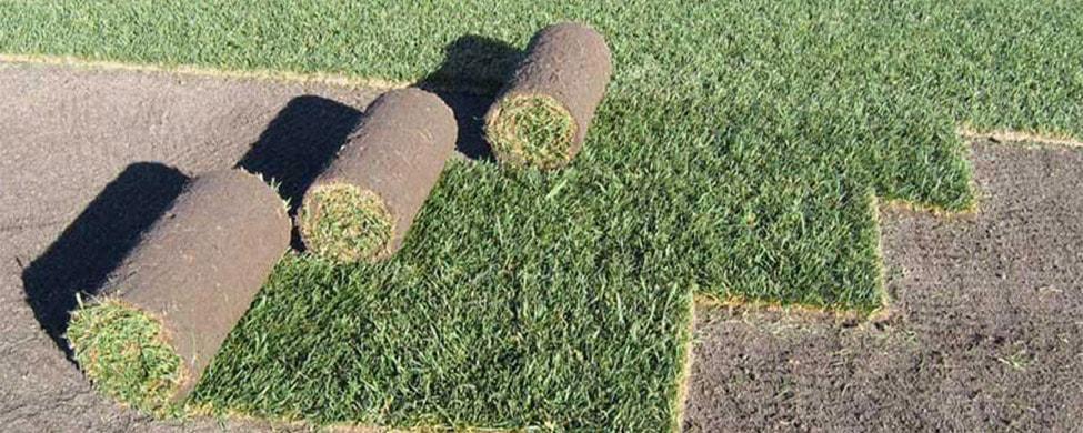 Рулонный газон в Спб